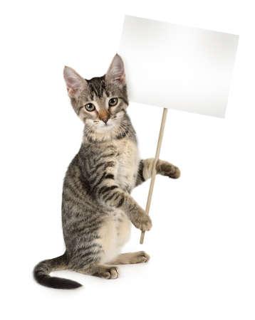 Grijs gestreepte kitten met poster in handen geïsoleerd op een witte achtergrond. Jouw tekst op de poster Stockfoto