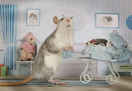 Mother rat changes the panties to her baby lying in a crib in her cozy house