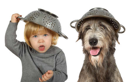 Portrait of a funny little girl with a colander on her head and purebred Irish wolfhound dog in the studio. Isolated on a white background Stock Photo