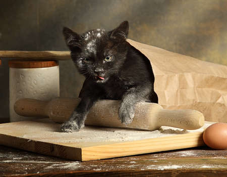 Small mischievous black kitten got into a bag of flour on the kitchen table