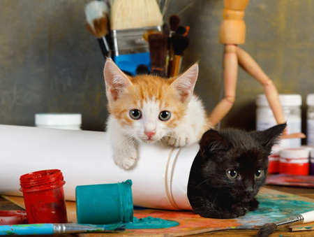 Two lovely mischievous kittens played pranks on the artist's table spilling a can of paint Imagens