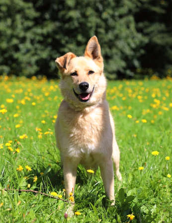 Adorable ginger mixed breed dog in a city park on a sunny summer day against blurry background