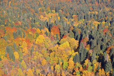 Full frame of colorful autumn trees in the Caucasus Mountains in the Republic of Adygea, Russia
