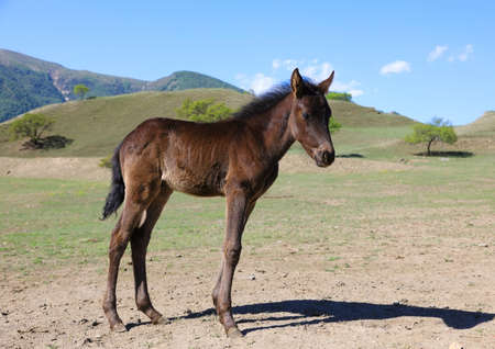 Little just born brown foal in its natural habitat on a sunny summer day