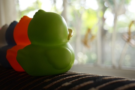 alone duck on sofa photo