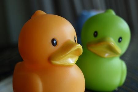 duo: duo duck Stock Photo