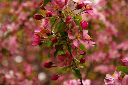 seasonic: pink flowers in garden Stock Photo