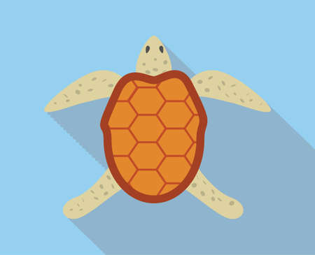 carapace: Sea turtle flat illustration on blue background