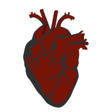 Ilustración del corazón humano.