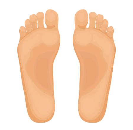 Human feet vector illustration