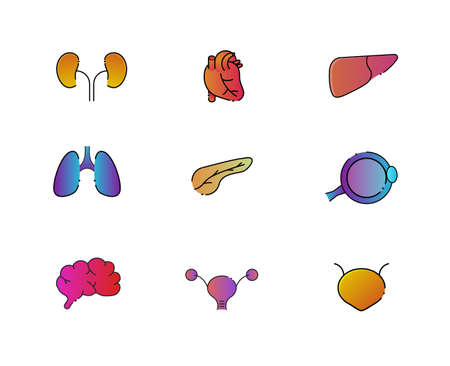 Vibrant human organ icons with black outline Illustration