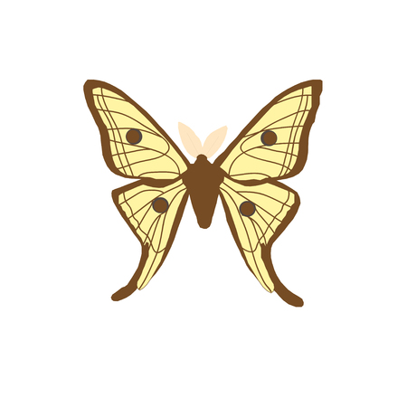 Vector drawing of a night Spanish butterfly.