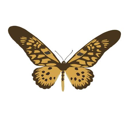 Large Uganda butterfly Druryeia Antimachus , vector illustration on white background