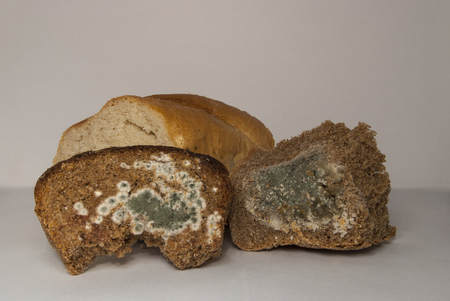Wheat and rye bread, covered with mold. A spoiled product 写真素材 - 99375098
