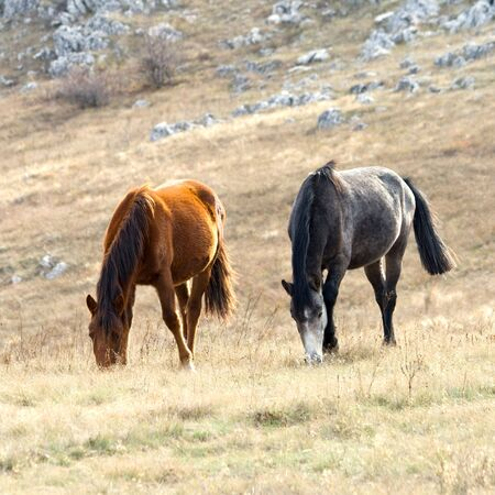 Horses on pasture Stock Photo - 6128978