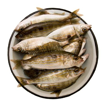 silver perch: Spicara smaris in plate. Isolated on white background.