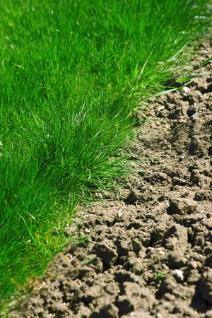 The boundary between the green grass and earth Stock Photo - 7015014