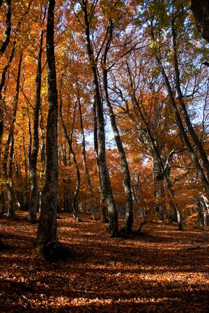 Autumn forest in the rays of evening sun photo