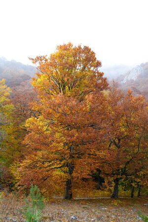 Beautiful autumn woods studded with colored leaves photo