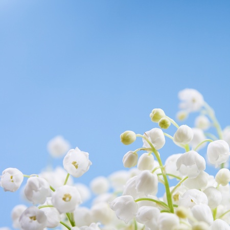 Flower lily of the valley on a blue background 版權商用圖片 - 9001218