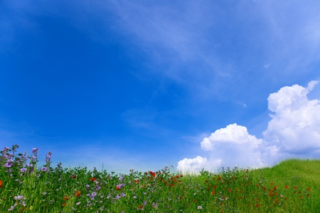Natural landscape. Green grass with red poppies and blue sky with clouds photo