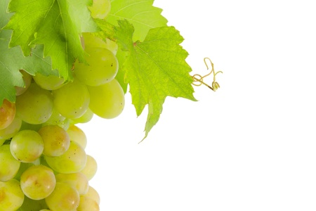 White grapes with green leaves. Isolated on white background.  photo