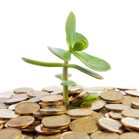 crassula: Money Tree (crassula) growing from a pile of coins. Isolated on white background.