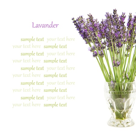 Beautiful lavender flowers in a vase on a white background