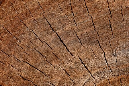 The texture of wood cut across. Can be used as background Stock Photo - 12762269