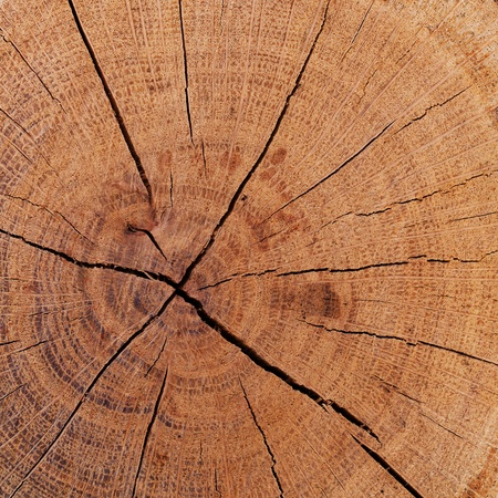 The texture of wood cut across. Can be used as background