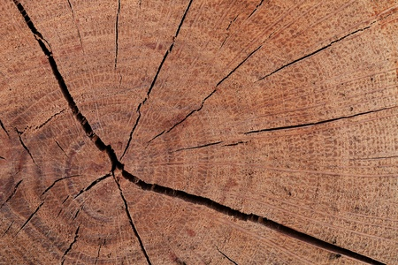 The texture of wood cut across. Can be used as background Stock Photo - 13008327