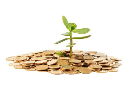 Money Tree  crassula  growing from a pile of coins  Isolated on white background   版權商用圖片