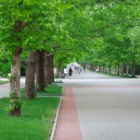 A long alley in the park under the green trees  Stock Photo - 13361296