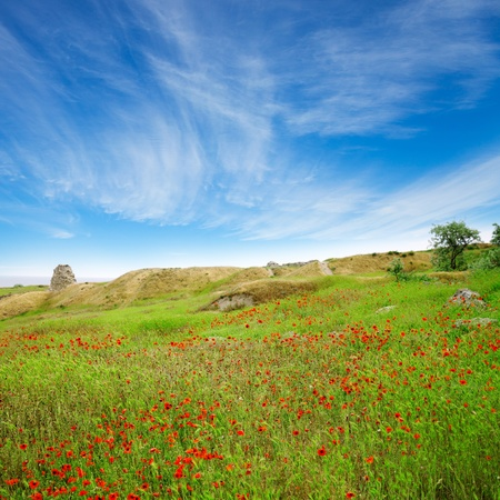 A beautiful field of poppies in a green grass under blue sky with clouds photo