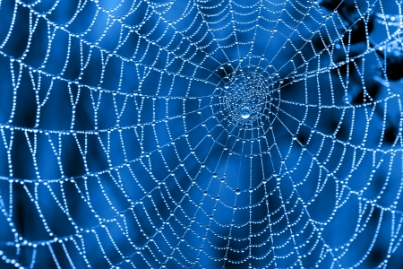 Cobweb with dew drops on a blue background