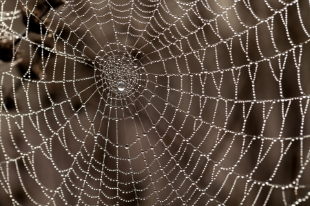 Cobweb with dew drops  Can be used as background 版權商用圖片