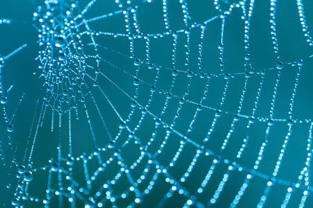 Cobweb with dew drops on a blue background photo