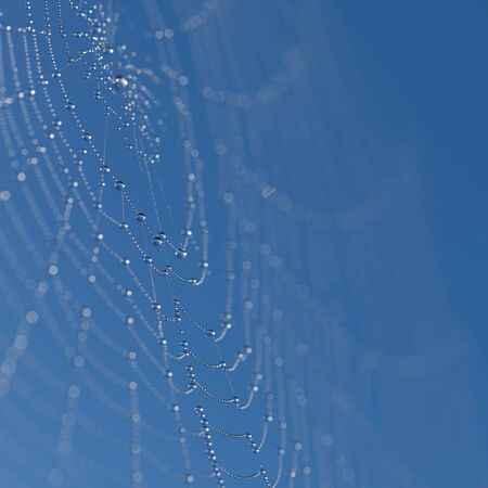 Web with dew drops on a blue background photo