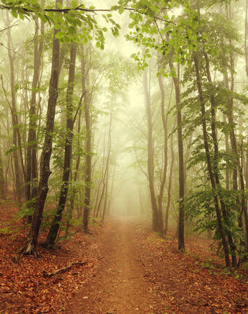 The road in the misty forest photo