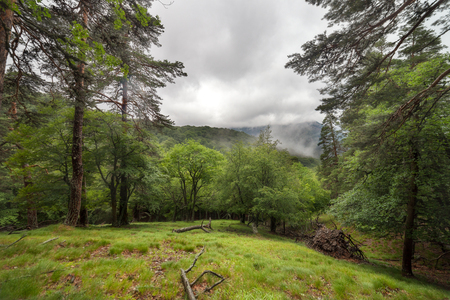 Green glade in the forest after the rain photo