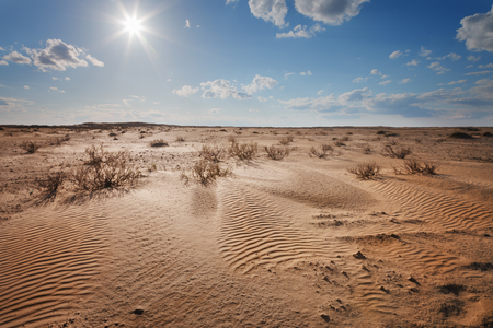 horizons: Landscape. The desert under a blue sky with clouds
