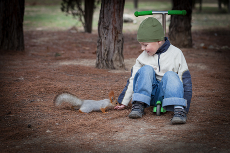 Boy feeds a squirrel from hands in the woods photo