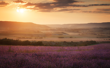 lavender: Landscape. Lavender field at sunset Stock Photo