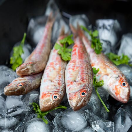 goatfish: Fresh fish (Mullus barbatus ponticus) laid out on pieces of ice with herbs