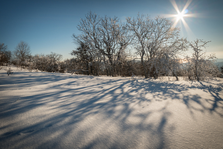 Winter forest against the blue sky with the sun 版權商用圖片