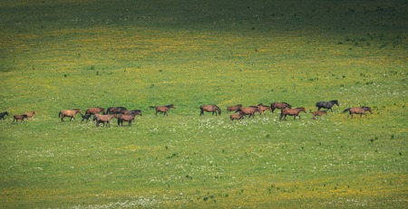 The herd of horses grazes on pasture with green grass