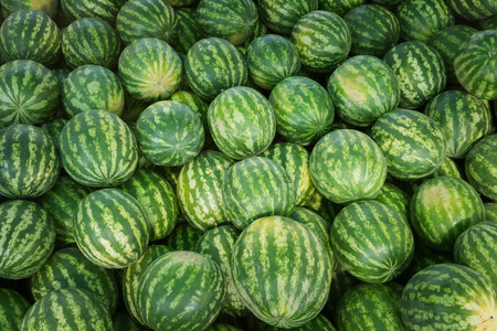 Ripe watermelons with a green striped rind after harvest