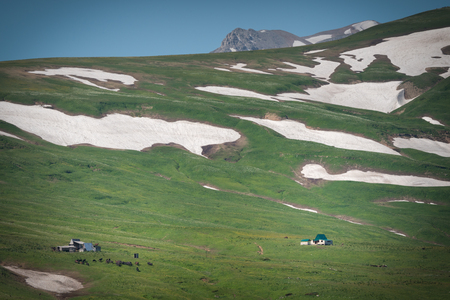 High mountain pasture with green grass and glaciers 版權商用圖片