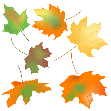 different shapes: maple leaves of different shapes on a white background