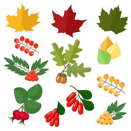 wild rose: Autumn collection of leaves and berries , wild rose and barberry, maple and oak Illustration